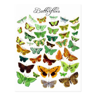 Green Butterfly Collection Postcard