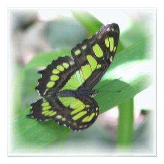 Green Butterfly Invitation