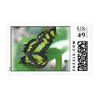 Green Butterfly Photo Postal Stamp