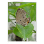 Green Butterfly Tamplate paper Greeting Card
