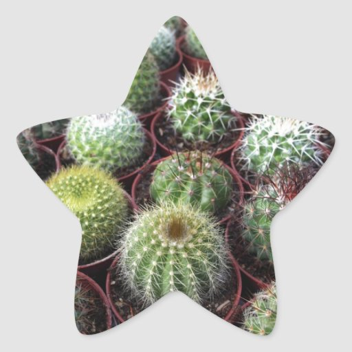 Green cactus plants star sticker