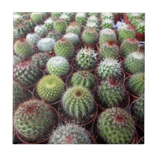 Green cactus plants ceramic tile