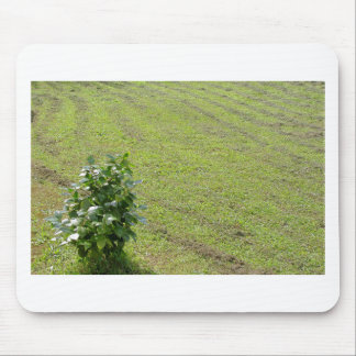 Green Camellia plant Mouse Pad