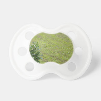 Green Camellia plant Pacifier