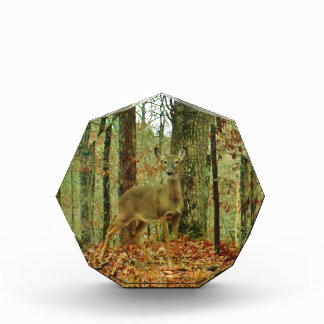 Green Camo,Camouflage Deer Awards