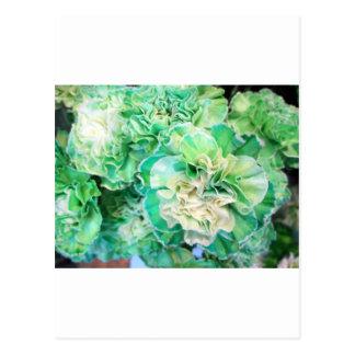 Green Carnation Postcard