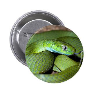 Green cat snake pinback button