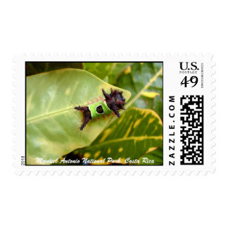 Green Caterpillar, Manuel Antonio National Park Stamp