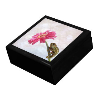 Green chameleon on pink flower gift box