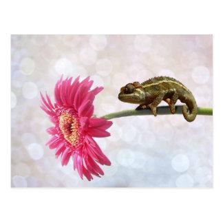 Green chameleon on pink flower postcard