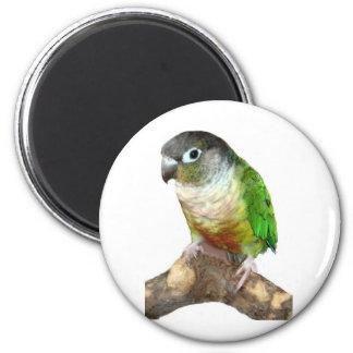 Green Cheek Conure 2 Inch Round Magnet