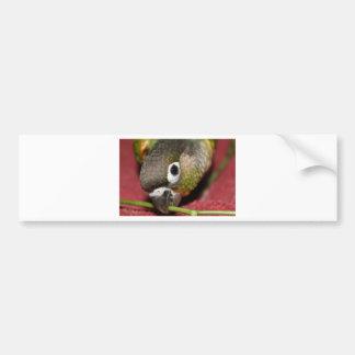 Green Cheek Conure Bumper Sticker