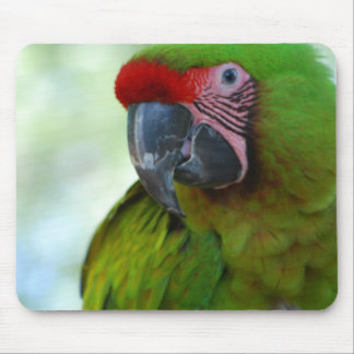 Green Cheek Conure Mouse Pad