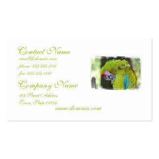 Green Cheek Conure Parrot Business Card