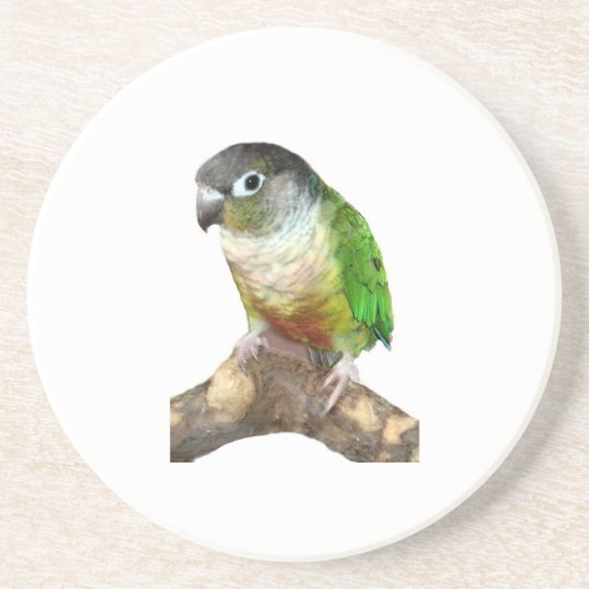 Green Cheek Conure Sandstone Coaster