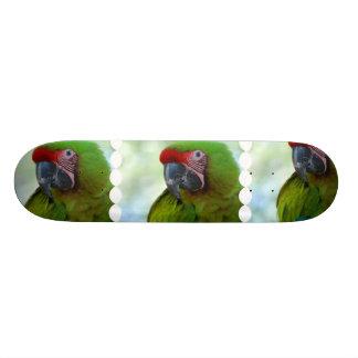 Green Cheek Conure Skateboard