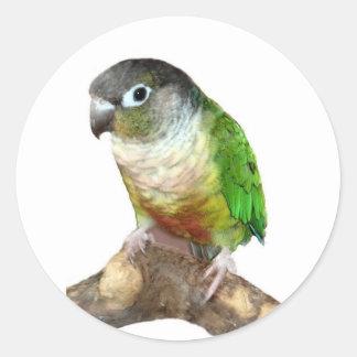 Green Cheek Conure Sticker