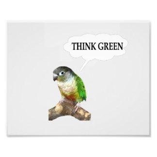 "Green Cheek Conure ""Think Green."" Photograph"