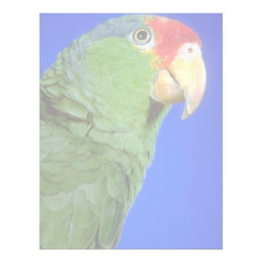 Green Cheeked Amazon Parrot Letterhead Template