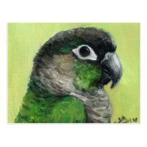 """Green Cheeked Conure"" Bird Art Postcard"