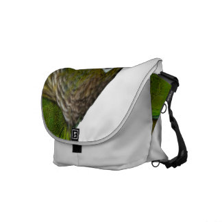 Green Cheeked Conure Courier Bag