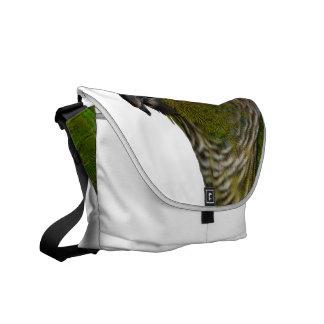 Green Cheeked Conure Messenger Bag