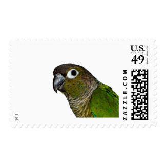 Green Cheeked Conure Postage