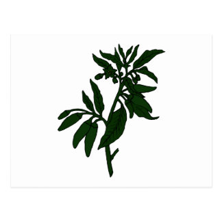 Green chili peppers on dark green plant postcard