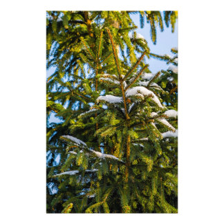 Green Christmas Tree In Snow Flyer