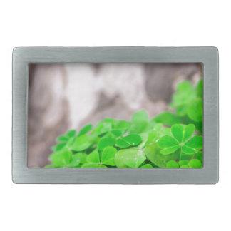 Green Clover Irish Sign Belt Buckles