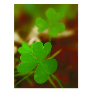 Green Clover Photograph Post Cards