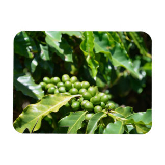 Green Coffee Berries Magnet