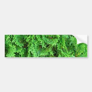 Green colorful evergreen shrub hedge art photo bumper sticker