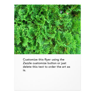 Green colorful evergreen shrub hedge art photo flyer