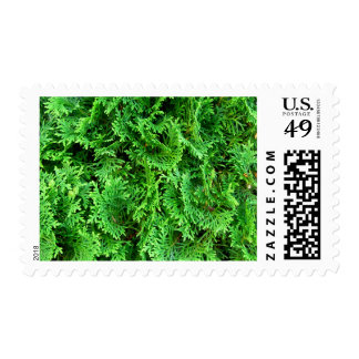 Green colorful evergreen shrub hedge art photo postage stamp