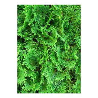 Green colorful evergreens photo fun unique texture personalized invitation
