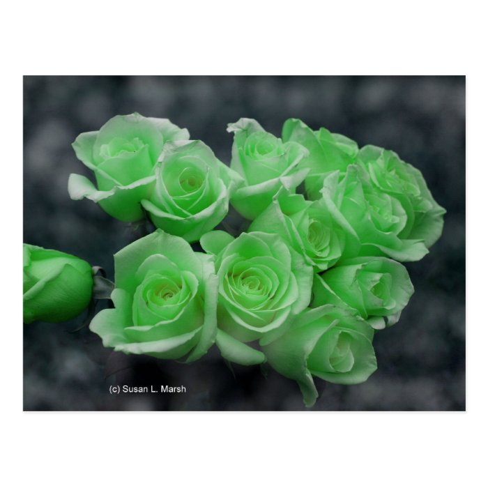 Green colorized bunch roses postcard
