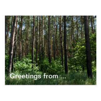 Green Coniferous Forest Greetings Post Card