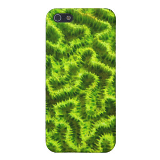 green coral ipod touch case