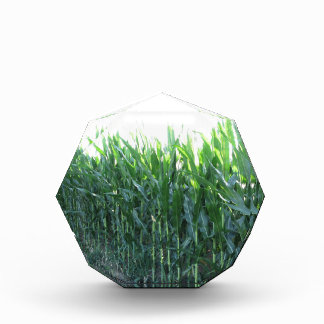 Green corn field on summer day acrylic award
