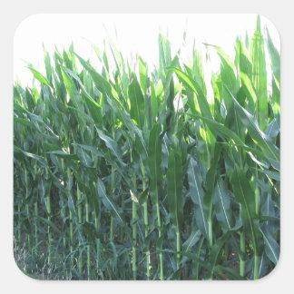 Green corn field on summer day square sticker