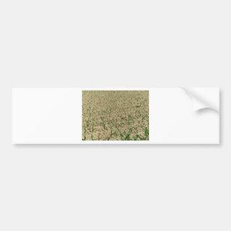 Green corn maize field in early stage bumper sticker