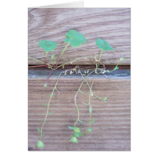 Green creeper card