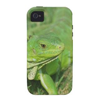 Green Creeping Lizard Vibe iPhone 4 Cover