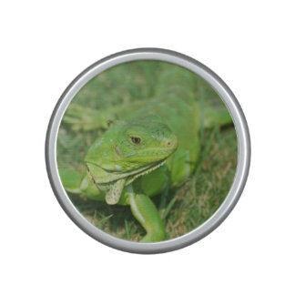 Green Creeping Lizard Speaker