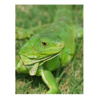 Green Creeping Lizard Postcard