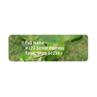 Green Creeping Lizard Return Address Label