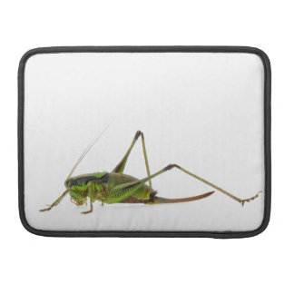 Green Cricket / Grasshopper - You can add text Sleeves For MacBooks