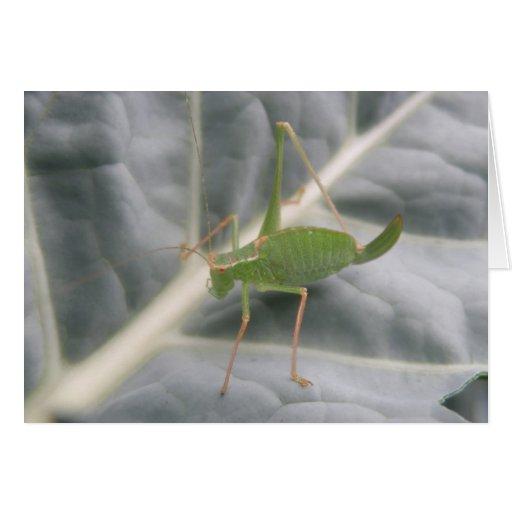 Green Cricket Macro Greeting Card