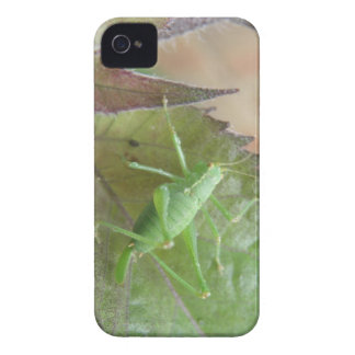 Green Cricket on a Leaf Blackberry Bold Case